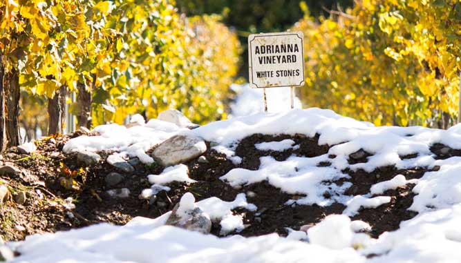 adrianna vineyard white stones